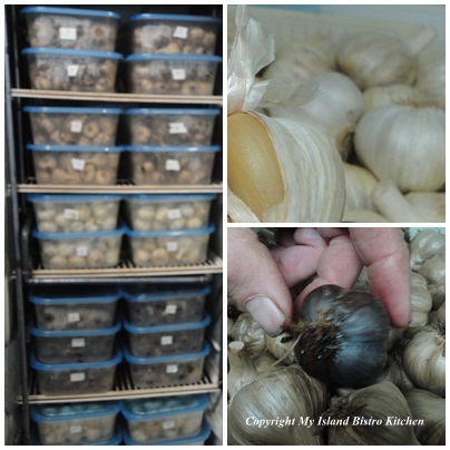 Black Garlic in Various Stages of Fermentation