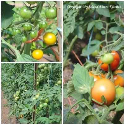 Vine-ripened Organic Tomatoes