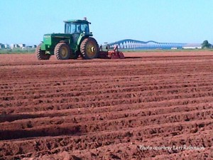 Fertilizing and Hilling the Potatoes