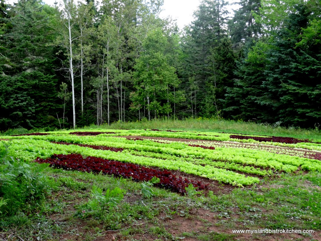 The Lettuce Field