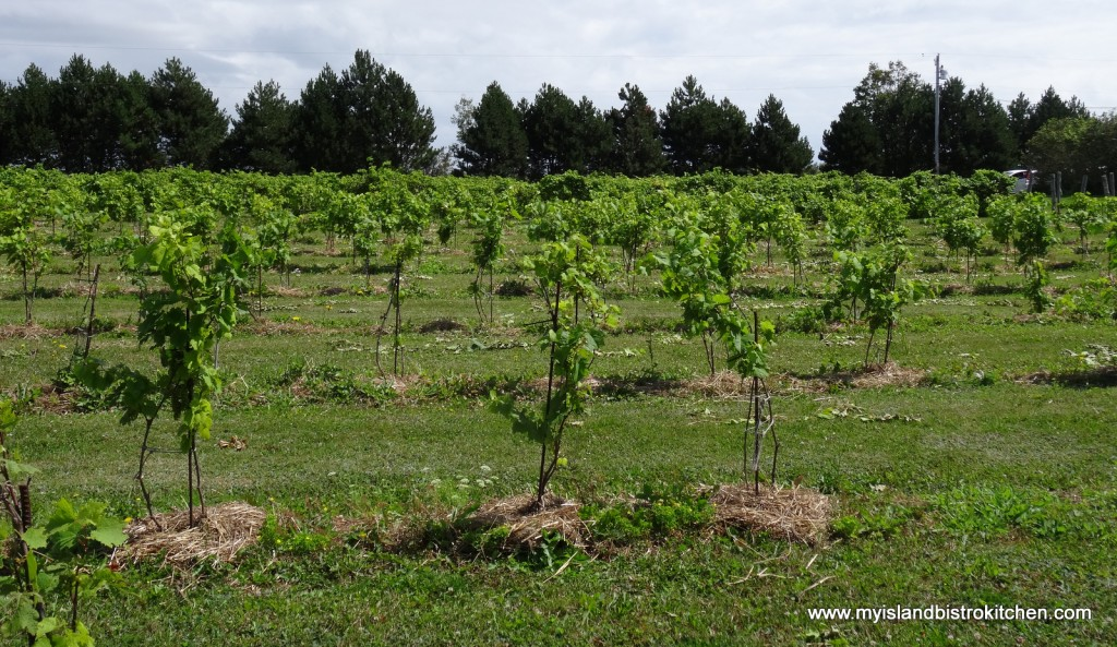 Grapevines at Rossingol Winery