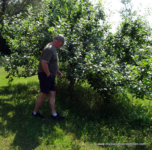 Mike Beamish Checking on his Apple Crop