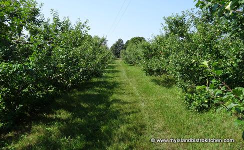 Beamish Organic Apple Orchard, Warren Grove, PEI