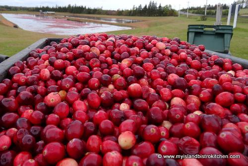 Freshly-harvested Cranberries from Mikita Farms in Farmington, PEI