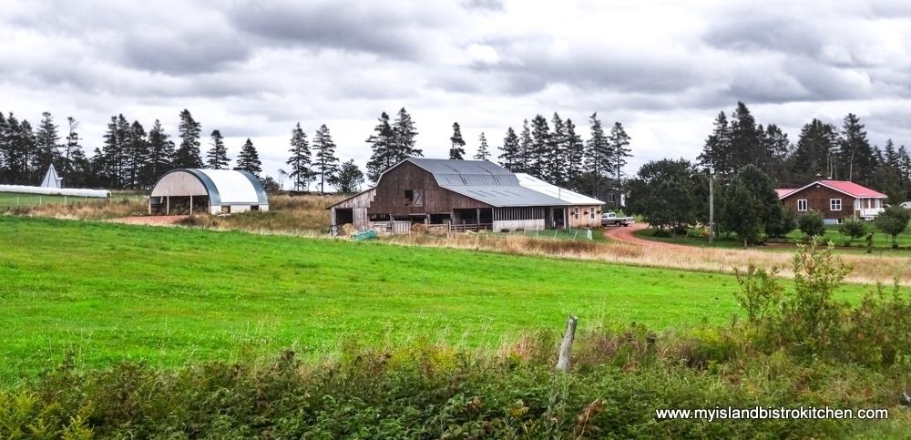 Isle Saint-Jean Sheep Farm in Rustico, PEI