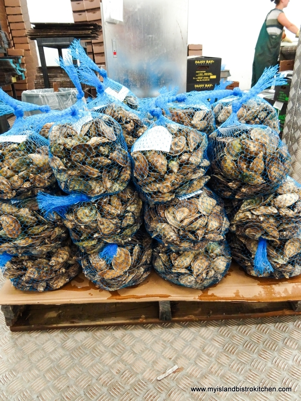Bags of Oysters at the Raspberry Point Oyster Co.