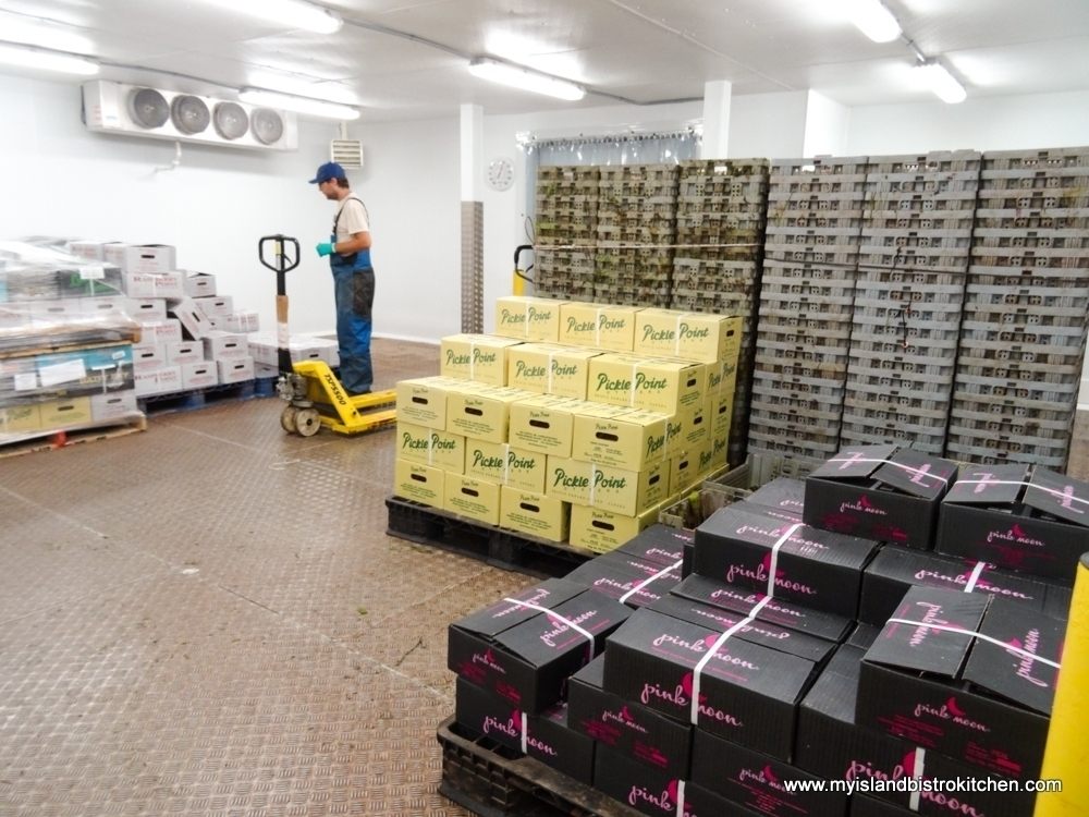 Inside the Cold Storage Room at Raspberry Point Oyster Co. in Bayview, PEI