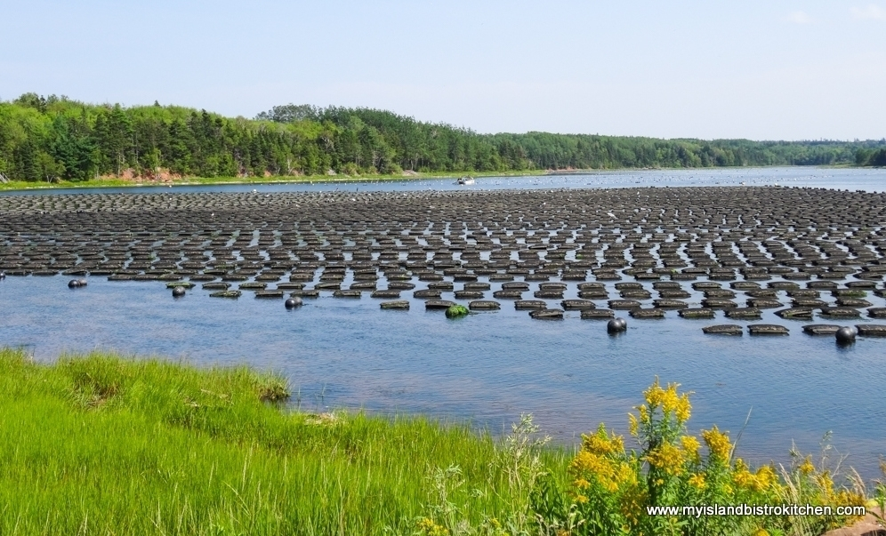 Floating Cages of Oysters in New London Bay, PEI