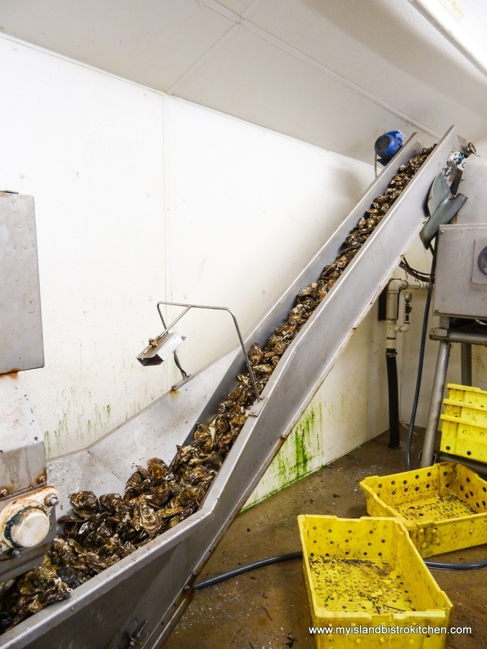 Oysters Arriving at the Processing Plant