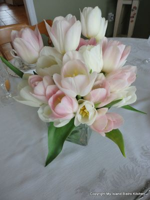 Delicate pastel tulips grown at Vanco Farms in Mt. Albion, PEI, Canada