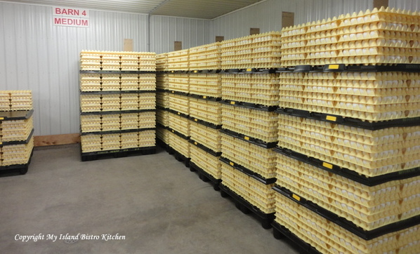 Eggs Stored in Refrigerator