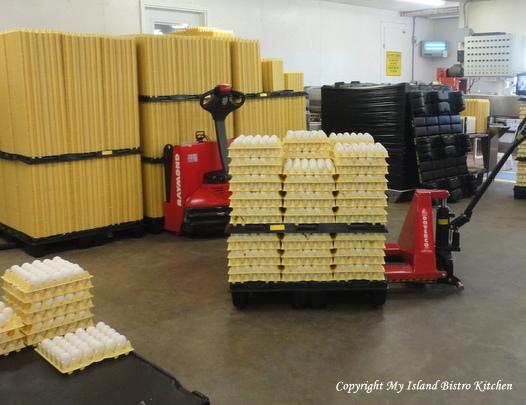 Graded Eggs Heading to Refrigeration