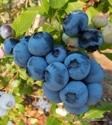 High Bush Blueberries