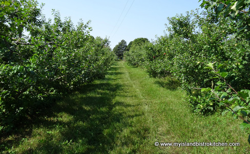 Beamish Organic Apple Orchard, Warren Grove, PEI