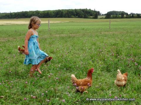 Barnyard Organic Farm in PEI
