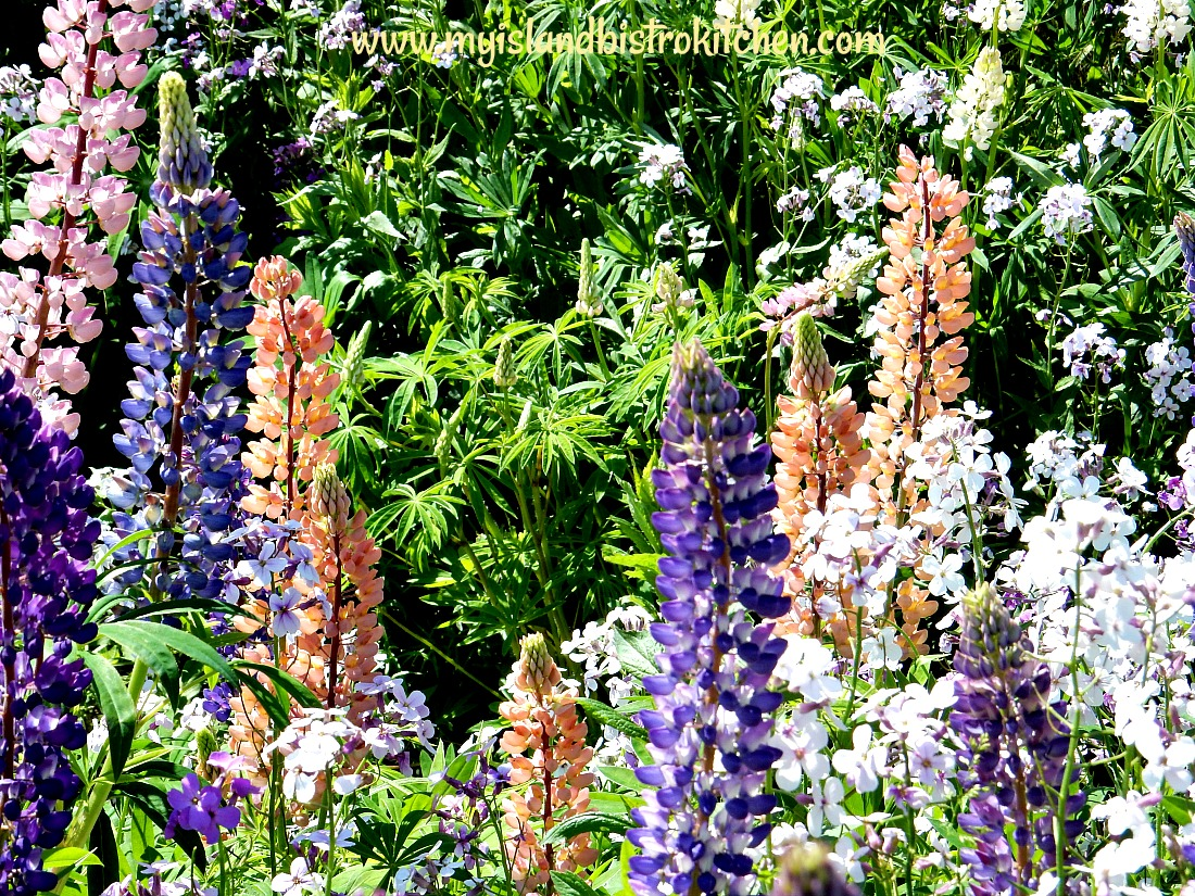 Lupines and Pholx