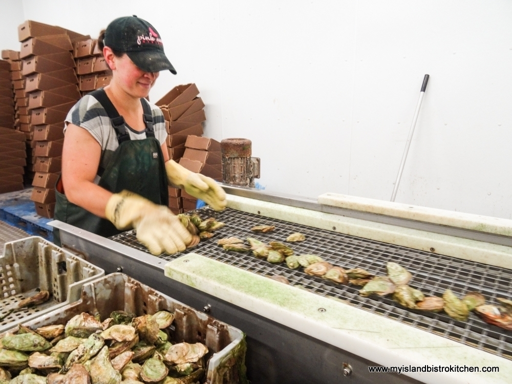 Quality Controlling the Oysters Just Before They Are Boxed for Shipping
