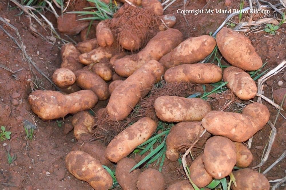 PEI Potatoes