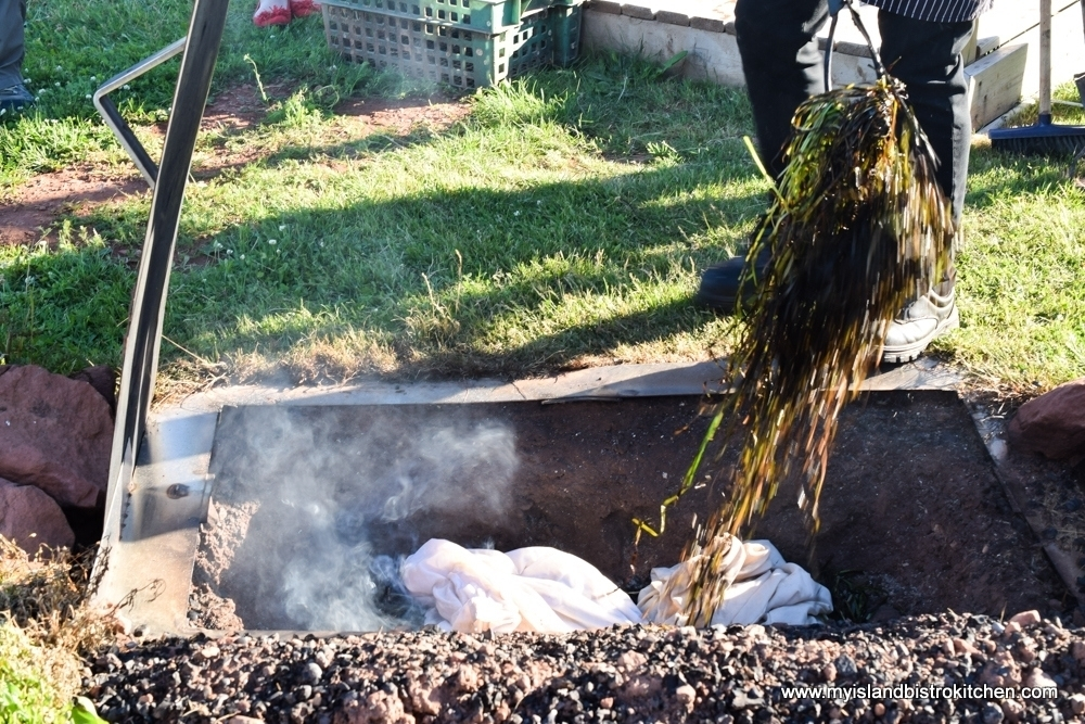 Covering bags of PEI Mussels with Seaweed for Cooking in the Fire Pit at The Table Culinary Studio in New London, PEI