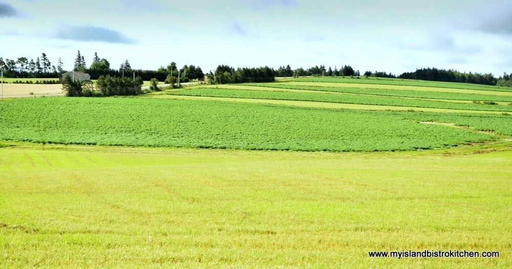 The Gently Rolling Hills of New London, PEI