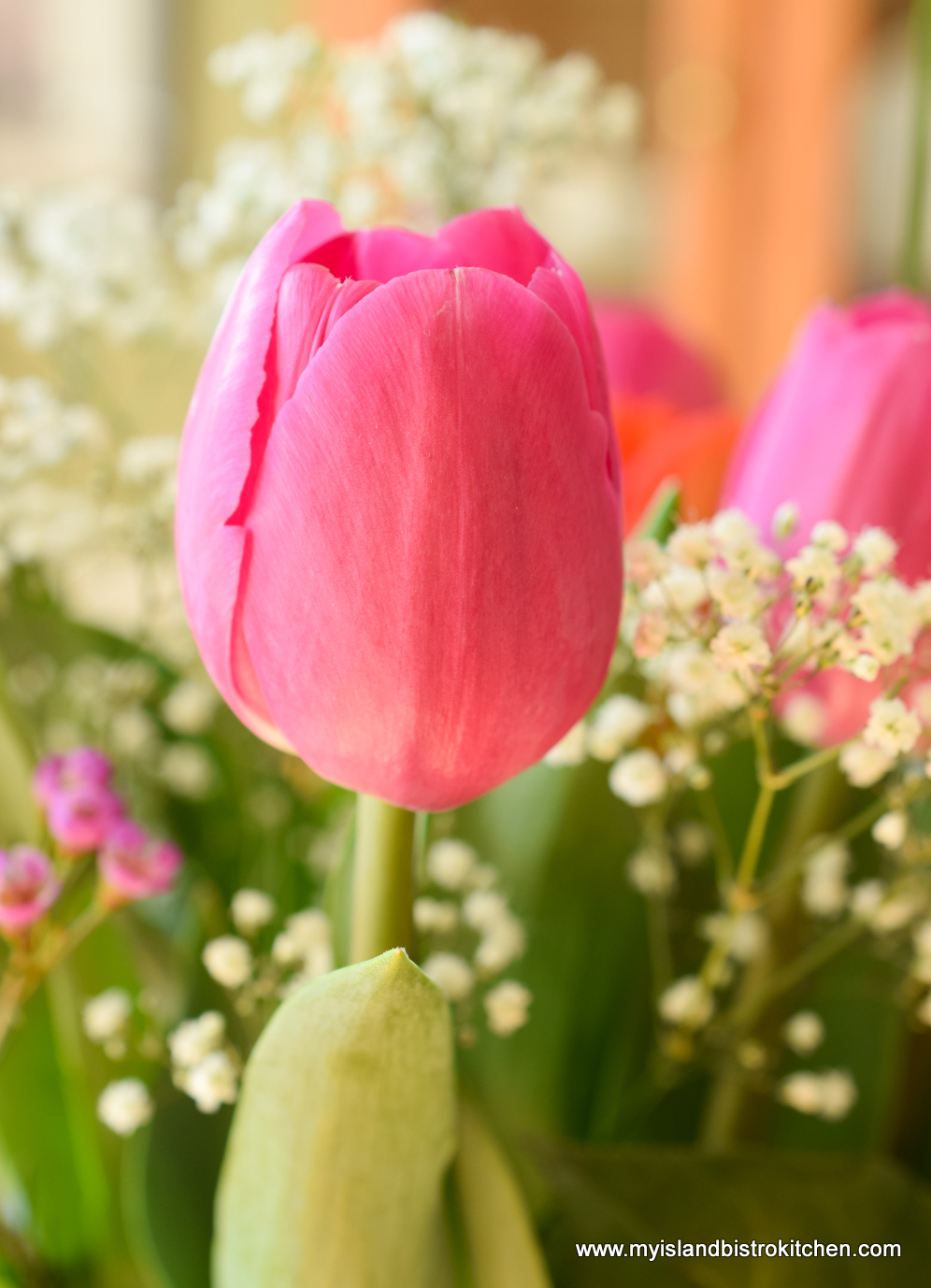 Single bright pink tulip stem