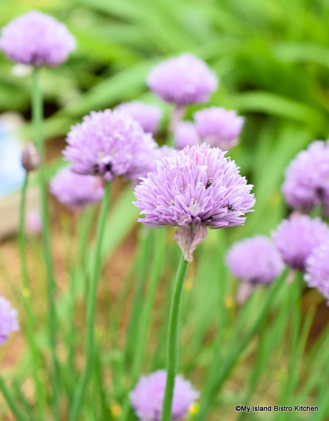 Chive Patch