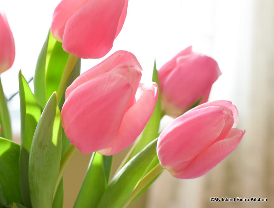 Close-up of pretty pink tulips